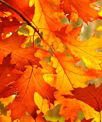 Herbstlaub, Anregung zur Wandgestaltung
